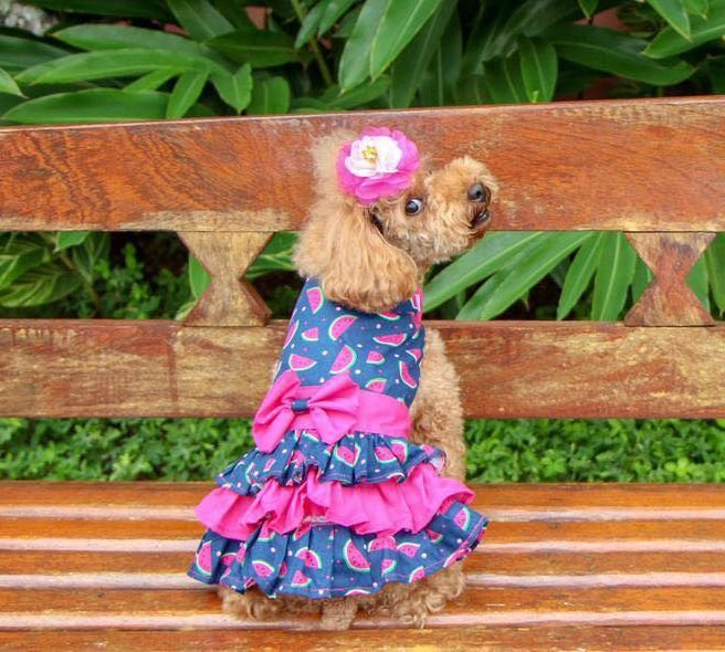 Flor Pet RAINHA para Cães e Gatos
