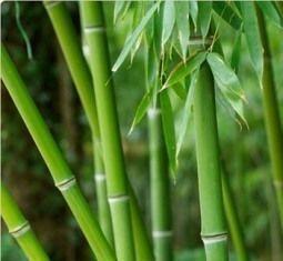 Aroma de bambu (apenas para convites em papel reciclado)