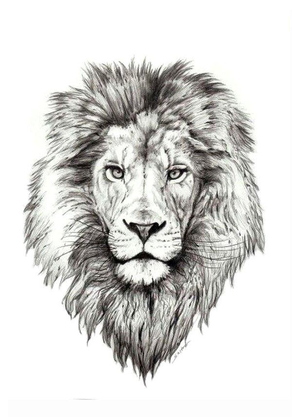 PB024 Leão