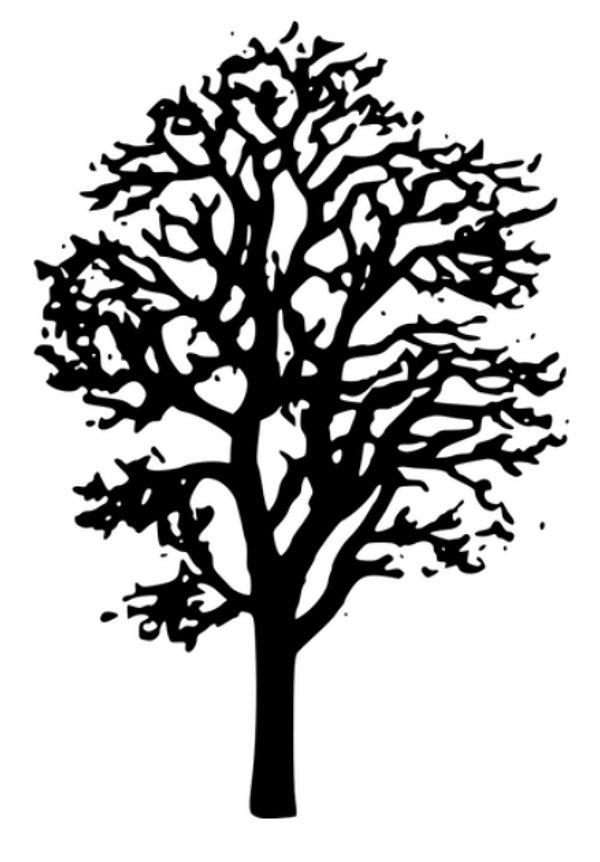 PB046 Árvore