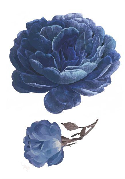 C067 flor azul