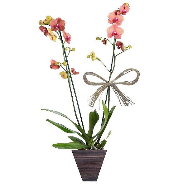 Orquídea Salmão com 02 Hástes No Vaso de Madeira.