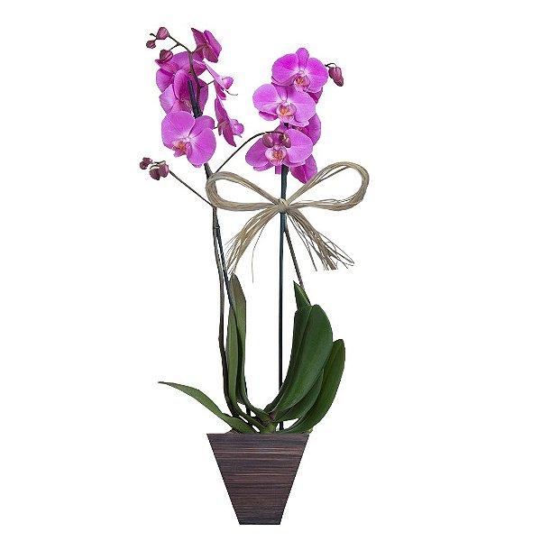 Orquidea phalaenopsis Pink com 02 Hástes no Vaso de Madeira