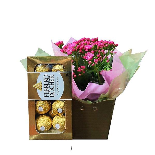 Mini Calandivas Rosa Plantada no Cachepot para Presente + Ferrero Rocher