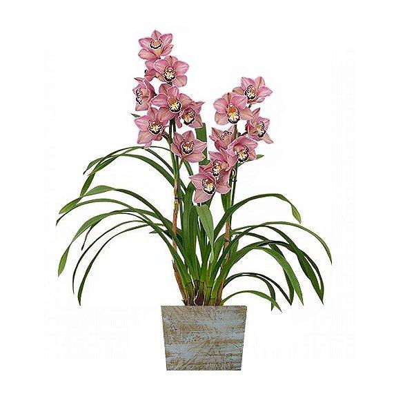 Orquídea Cymbidium Rosa No Cachepot de Madeira