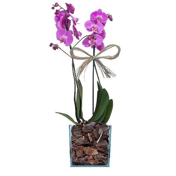 Orquidea phalaenopsis Pink No Vaso Quadrado de Vidro