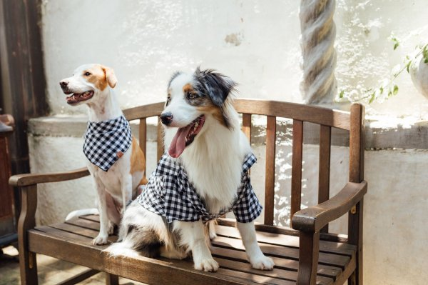 Camisa Xadrez para Cachorro - MIB