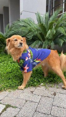 Camisa Estampada para Cachorro - Juquehy