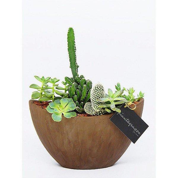 Arca cerâmica com mix de cactos e suculentas
