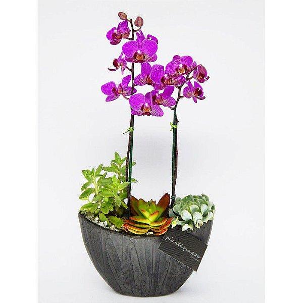 Arca mix de cactos suculentas e orquídea roxa