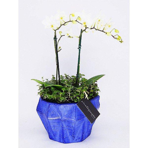 Cachepot diamante cerâmica com mix de cactos, suculentas e orquídeas brancas