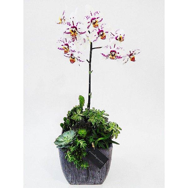 Cachepot quadrado grande em cerâmica com cactos, suculentas e orquídea branca e rosa