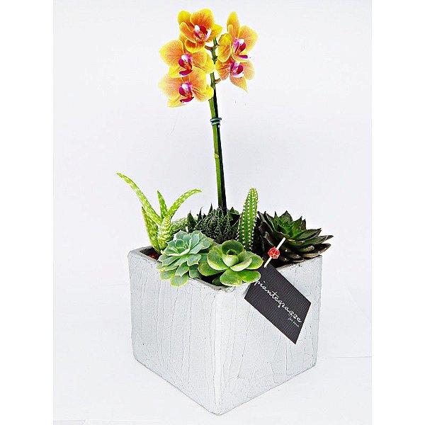 Cachepot cubo com mix de cactos, suculentas e orquídea