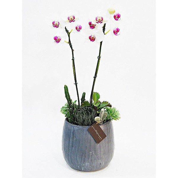 Vaso bojudo grande cerâmica com mini cactos, suculentas e orquídea branca