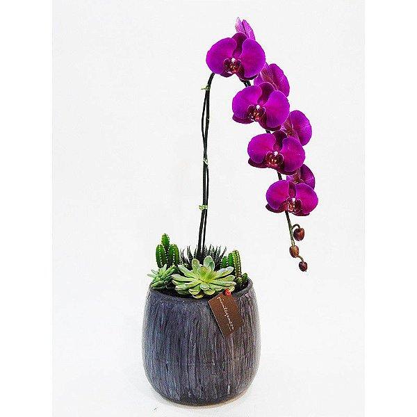 Vaso bojudo grande cerâmica com mini cactos, suculentas e orquídea roxa em cascata
