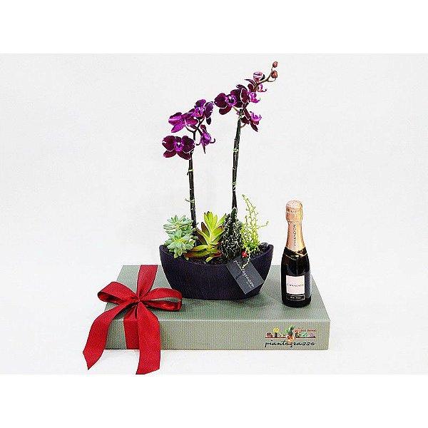 Kit Arca cerâmica com cactos, suculentas e orquídea + Chandon rosé baby
