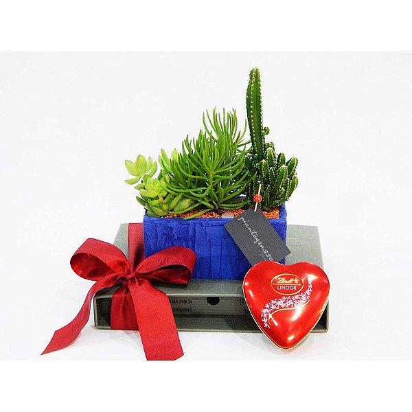 Kit Mini Jardineira com cactos e suculentas + Lindt Heart