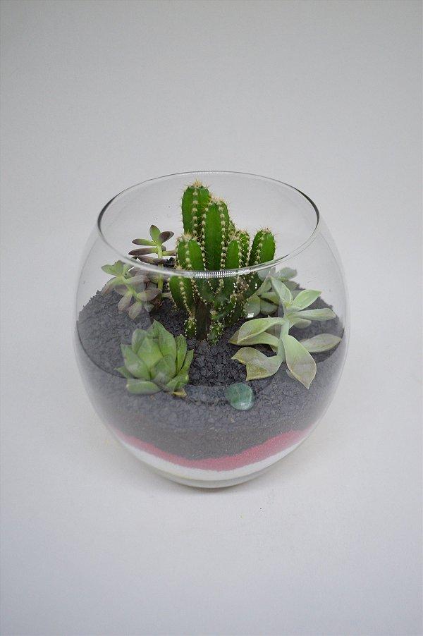 Terrário aquário médio de vidro com Cactos e Suculentas