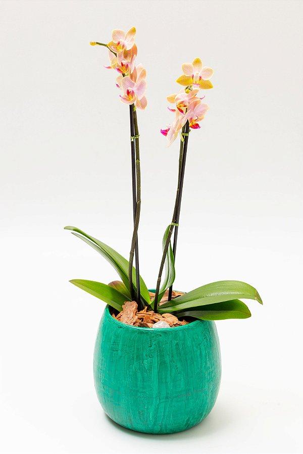 Vaso Bojudo Redondo Médio com Mini Orquídeas
