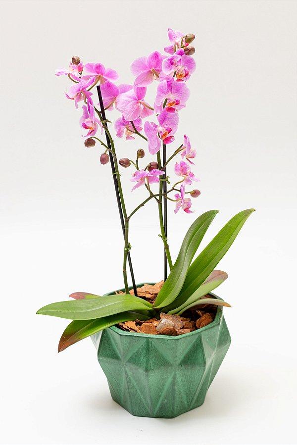 Vaso Diamante Grande com Orquídeas