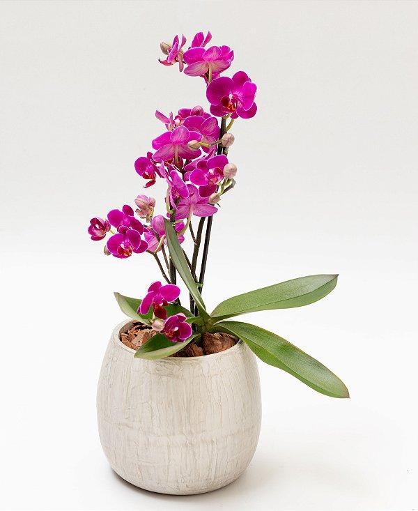 Vaso Bojudo Redondo Grande com Mini Orquídeas