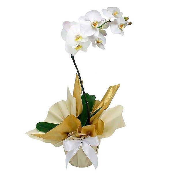 Orquídea Phalaenopsis com Flores Brancas
