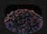 Uva Passa Escura Sem Semente - Imagem 1