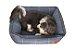 Cama para Cachorro Mabuu Pet - Azul com Linhas - Imagem 4