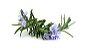 #dōTERRA Lavender Touch 10ml - Lavanda - Imagem 3