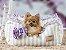 Cama Retangular para Cachorros Bailarina Lilás - Imagem 2