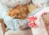 Cama para Cachorros | Retangular Provence Azul - Imagem 2