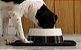 Comedouro para Cachorros | Black - Imagem 2