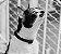 Coleira para Gatos | Gotham - Imagem 6