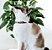 Coleira para Gatos Flórida - Imagem 2