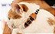 Coleira para Gatos | Patagônia - Imagem 2