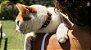 Coleira para Gatos | Patagônia - Imagem 4