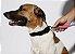 Guia de Corda para Cachorros | Nebula - Imagem 2