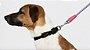 Guia de Corda para Cachorros | Nebula - Imagem 4
