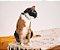Coleira para Gatos   Marcuch - Imagem 4