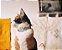 Coleira para Gatos   Marcuch - Imagem 2