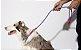 Guia Unificada para Cachorros   Nebula - Imagem 2
