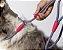 Guia Unificada para Cachorros   Nebula - Imagem 6
