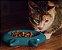 Comedouro para Gatos | Cerâmica Cat Turquesa - Imagem 1