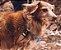 Peitoral para Cachorros Anti Puxão | Aziza - Imagem 2
