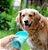 Garrafa Portátil para Cachorros e Gatos Luxo Verde - Imagem 2