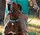 Coleira para Cachorros Scooby-Doo com Pingente - Imagem 3
