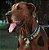 Peitoral H para Cachorros Scooby-Doo - Imagem 2