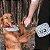 Petisqueira para Cachorros - Edimburgo Grayer - Imagem 3