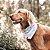 Bandana para Cachorros - Cool Army - Imagem 2
