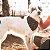 Bandana para cachorros | Cool Thunder - Imagem 3